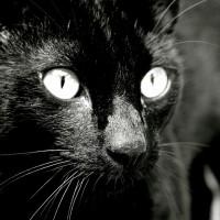 Коты едят котят? Явно не кот Мазай!
