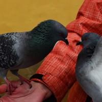 Как назвать птицу? Клички для птиц сообщают читатели