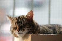 Спящий кот, спящая кошка —  35 фото
