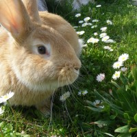 Чем кормить кроликов весной?