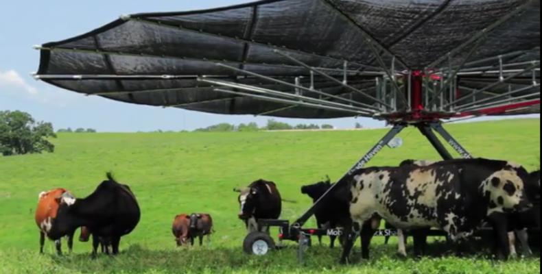 Навес от солнца для коров!