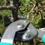 Зачем нужна обрезка деревьев в саду? 4 причины