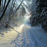 Январь, зима, природа — фото, приметы января