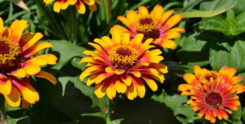 Цветники июля: сезонные хлопоты
