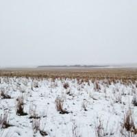 Найди 550 овец на фото! Пастух потерял своих овец