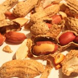 Арахис: выращивание в домашних условиях