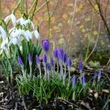 Весенний цветник: схемы своими руками
