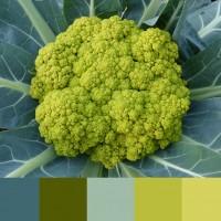 Цвет Limpet shell — палитры сочетания цвета и его оттенков