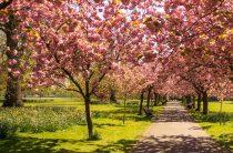 Аленка мохнатая: наши наблюдения