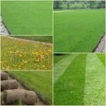 Газон весной: профилактика заболеваний газона