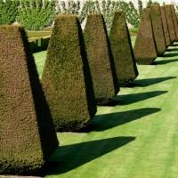 Обрезка декоративных кустарников и деревьев — красота зеленых скульптур