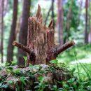 Валежник 2019 — закон о сборе валежника в лесу