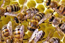 Корм для пчел — как подкормить пчел зимой и ранней весной
