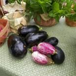 Как собрать семена баклажанов