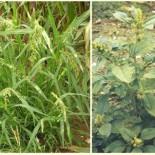 Борьба с сорняками: 7 способов
