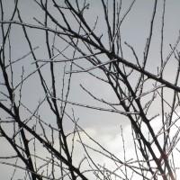 Плодовые деревья зимой. Как сад зиму переносит?