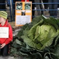 Сорта капусты — как выбрать?