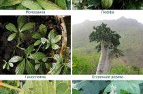 Тыквенные растения — все и вам знакомы?