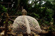 Какие бывают грибы? Необычные! (фото)