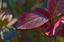 Красивые фото осени — осенние листья