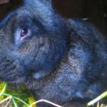 Кролики зимой — размножение