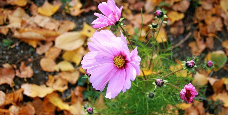 Правильный подзимний посев цветов: плюсы, минусы, что можно сеять