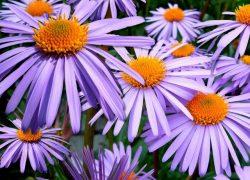 Цветы, цветущие в сентябре: 33 самых красивых!