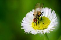 Борьба с мухами: все о мухах, способы борьбы, фото