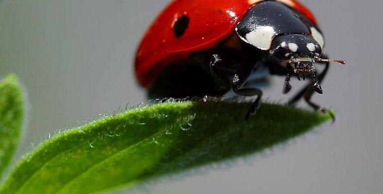 Полезные насекомые сада и огорода — как привлечь?
