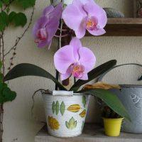 7 проблем с орхидеей: почему желтеют листья, не цветет, увядает и т.д
