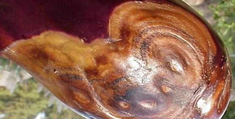 Фомопсис баклажана: 7 способов борьбы и профилактики