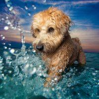 Лучшие фотографии собак