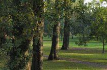 Дерево тополь: фото, интересные свойства